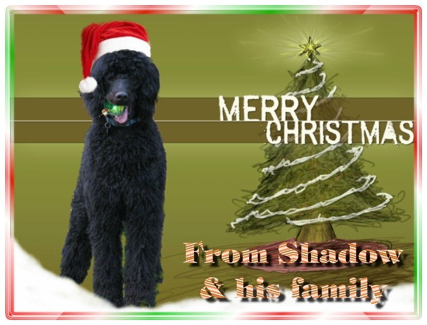 Name:  shadow-christmas-card-3.jpg Views: 2012 Size:  291.5 KB