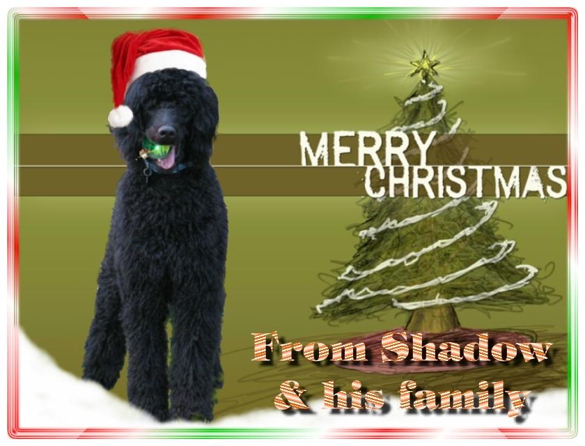 Name:  shadow-christmas-card-3.jpg Views: 6054 Size:  291.5 KB